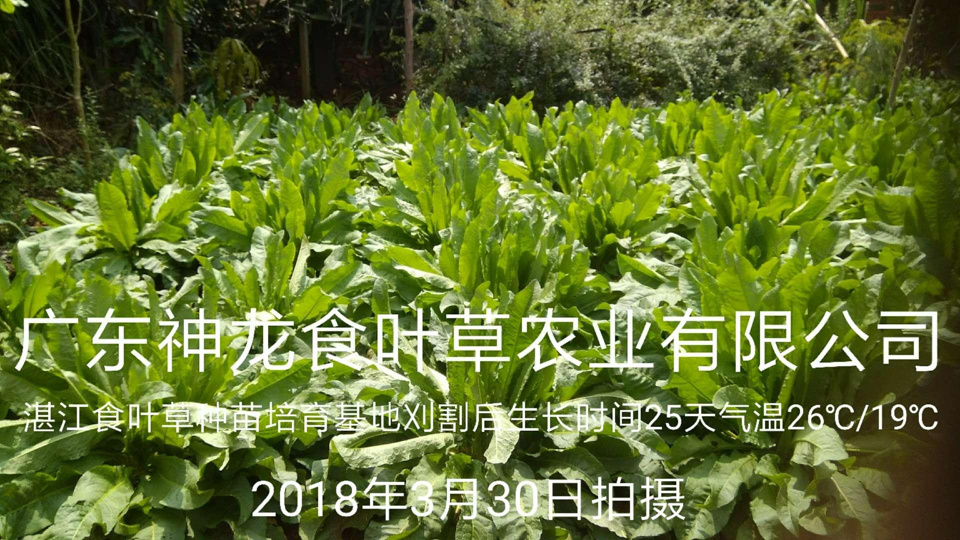 湛江万博mantex官网